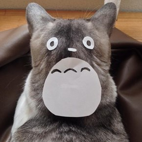 Any Kitty Can Become Totoro With Just a Few Paper Cutouts