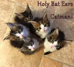 Holy Bat Ears Catman!