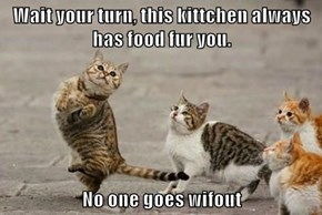 Wait your turn, this kittchen always has food fur you.  No one goes wifout