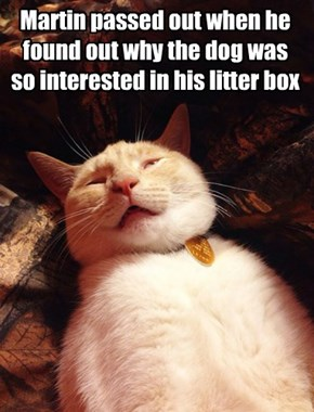 Martin passed out when he found out why the dog was so interested in his litter box