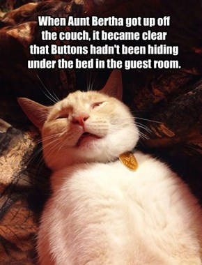 When Aunt Bertha got up off  the couch, it became clear that Buttons hadn't been hiding under the bed in the guest room.