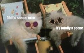 Scene kittehs are making the scene