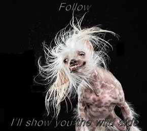 Follow  I'll show you the wild side