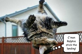 C'mon Ralphie stick the landing!