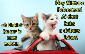 Hey Misture Peleecman!  Ai dont  habs  a driburs  lisinse!