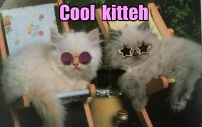Cool  kitteh