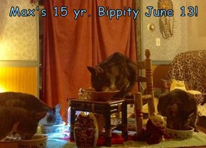 Max's 15 yr. Bippity June 13!