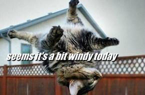 seems it's a bit windy today