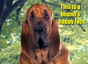 This is a hound's       happy face.