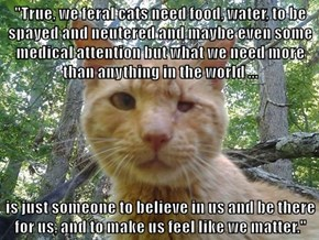 """True, we feral cats need food, water, to be spayed and neutered and maybe even some medical attention but what we need more than anything in the world ...  is just someone to believe in us and be there for us, and to make us feel like we matter."""