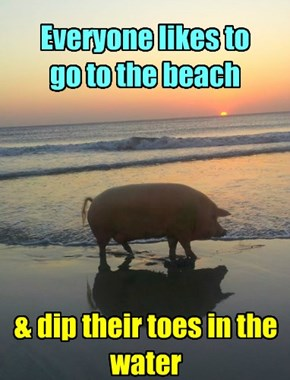 Everyone likes to go to the beach