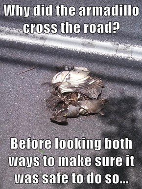 Why did the armadillo cross the road?  Before looking both ways to make sure it was safe to do so...
