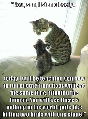 Parental Wisdom