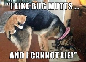 """I LIKE BUG MUTTS ...  AND I CANNOT LIE!"""