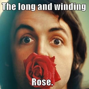 The long and winding                    Rose.