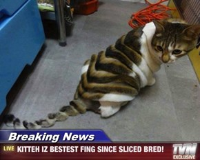 Breaking News - KITTEH IZ BESTEST FING SINCE SLICED BRED!