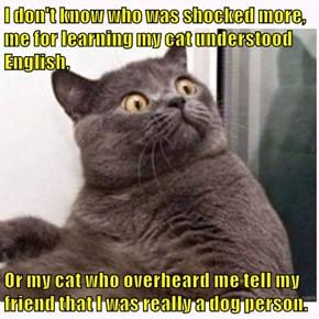 I don't know who was shocked more, me for learning my cat understood English,  Or my cat who overheard me tell my friend that I was really a dog person.