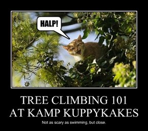 TREE CLIMBING 101 AT KAMP KUPPYKAKES