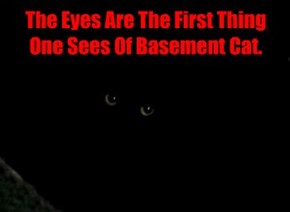 The Eyes Are The First Thing One Sees Of Basement Cat.