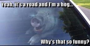 Yeah, it's a road and I'm a hog...  Why's that so funny?