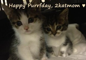 Happy Purrfday, 2katmom ♥