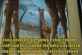 """Many animals are going extinct in the wild, and this will be the only way left to photograph them in a """"natural"""" setting."""