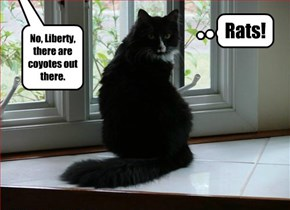 No, Liberty, there are coyotes out there.