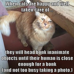When cats are happy and well taken care of ...  they will head bonk inanimate objects until their human is close enough for a bonk                                           (and not too busy taking a photo.)