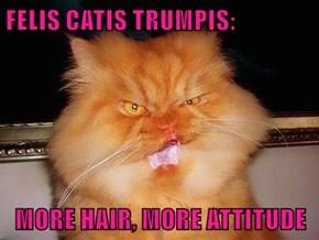 FELIS CATIS TRUMPIS:  MORE HAIR, MORE ATTITUDE