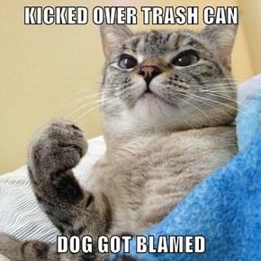 KICKED OVER TRASH CAN  DOG GOT BLAMED