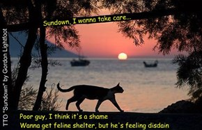 """Feral Cat Challenge"" (TTO ""Sundown"" by Gordon Lightfoot)"