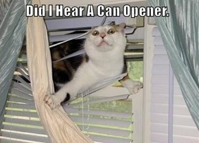 Did I Hear A Can Opener.