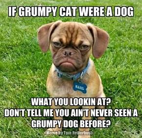 IF GRUMPY CAT WERE A DOG