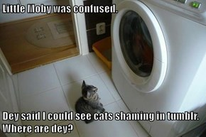 Little Moby was confused.  Dey said I could see cats shaming in tumblr.  Where are dey?