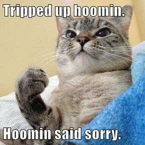 Tripped up hoomin.  Hoomin said sorry.