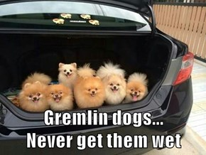 Gremlin dogs...                                Never get them wet