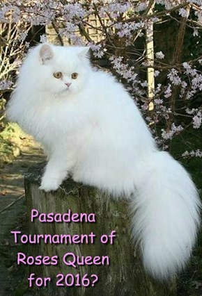 Pasadena Tournament of Roses Queen for 2016?