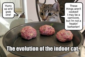 The evolution of the indoor cat.