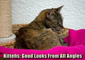 Kittehs: Good Looks From All Angles