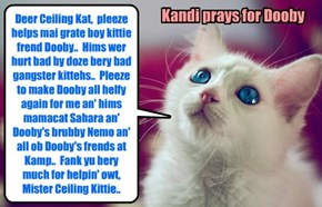 Kandi prays to Ceiling Cat dat Dooby can surbibe hiz injurees..