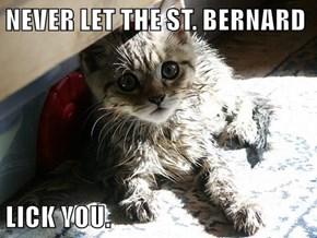 NEVER LET THE ST. BERNARD  LICK YOU.