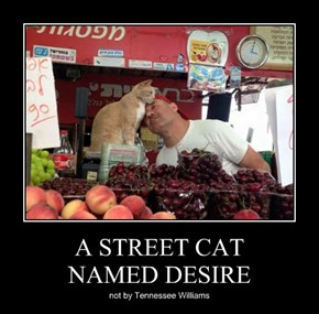A STREET CAT NAMED DESIRE