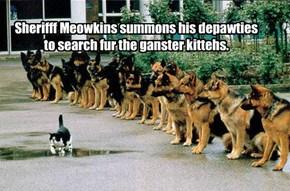 Kuppykakes posse takes shape.