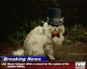 Breaking News - Mayor Catspurr offers a reward for the capture of the meenie kittehs.