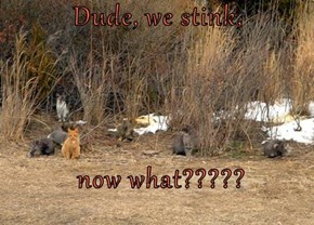 Dude, we stink,   now what?????