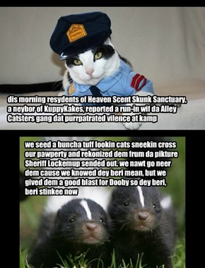 Alley Catsters sited! here is Sheriff Lockemup wif an update on da kitteh hunt for da gangsta cats dat attacked Nemo and Dooby