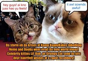 Celebrities speek owt abowt da Kamp KuppyKakes krises!