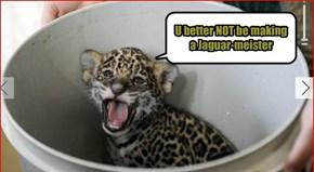 U better NOT be making a Jaguar-meister