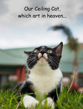 Our Ceiling Cat, which art in heaven...