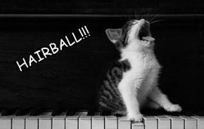 HAIRBALL!!!